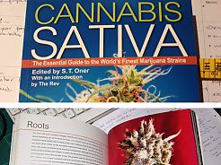 New book of Cannabis Sativa: Roots
