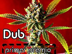 Spring 2015 full of awards for Reggae Seeds in indoor bio and BHO.